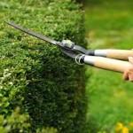 images.jpg in de tuin werken heggenschaar